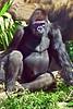 gorilla poses_006p