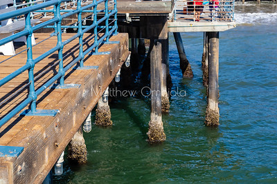 Molluscs on pier supports in the water. Mussels clams clinging to the pier supports in Santa Monica California.
