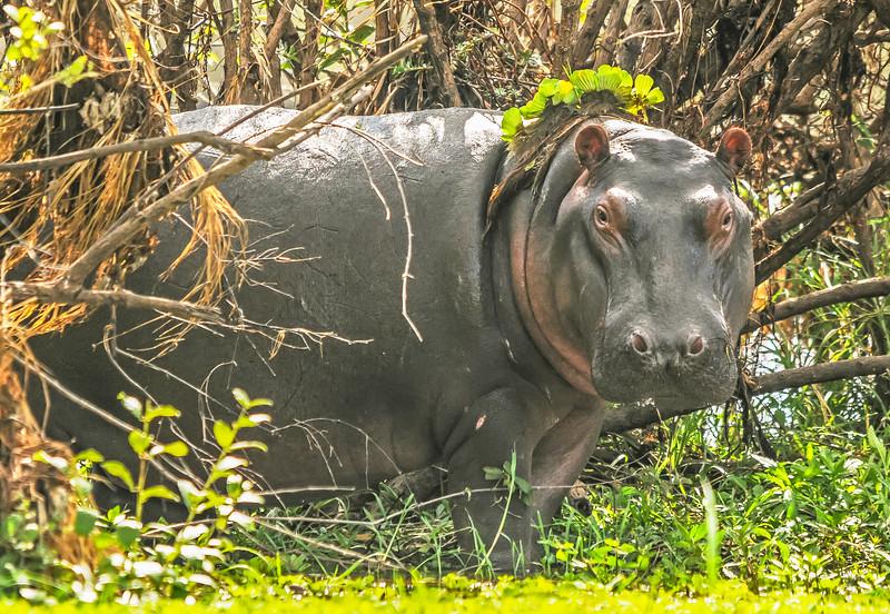 Hippo with Garland 297 210 300 dpi 3372.jpg