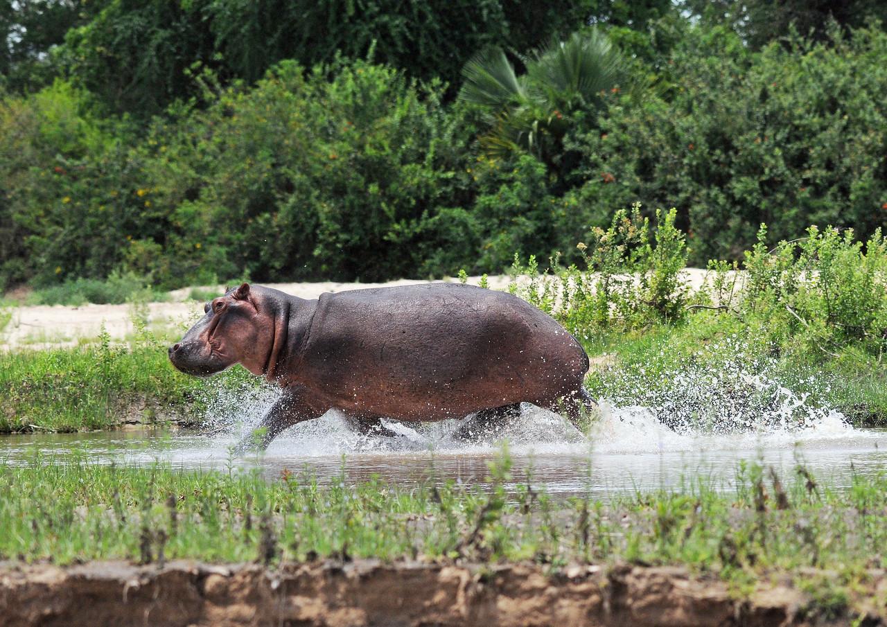 081_Hippo Andrea.jpg