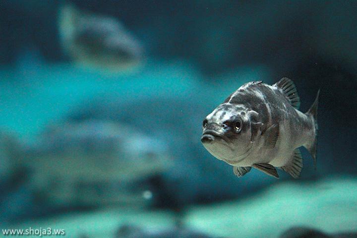 A Fish ...