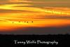 Sandhill Crane Silhouettes, Crex Meadows, Wisconsin