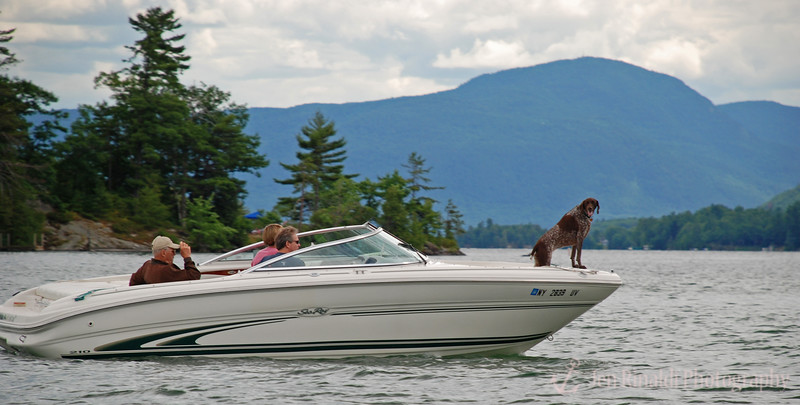 The real captain of this boat!  A German Shorthaired Pointer - Lake George, NY