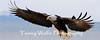 Bald Eagle (#6983)