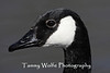Canada Goose (#0545)