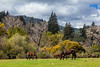 Felton Horse Field