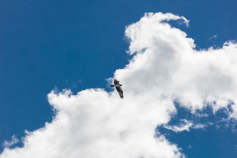 Cloudy Bird Patrol