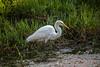 Snowy Egret 2