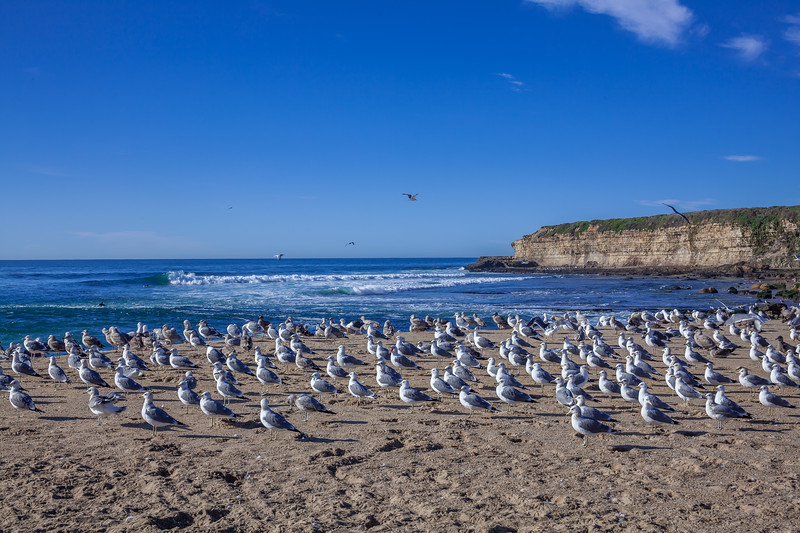 Seagulls on Four Mile Beach