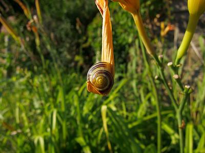 Snail Hammock