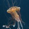 Animals; Aequoreus; Vita; Marine; Life; Havdyr