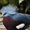 Aves; Birds; Fugle;