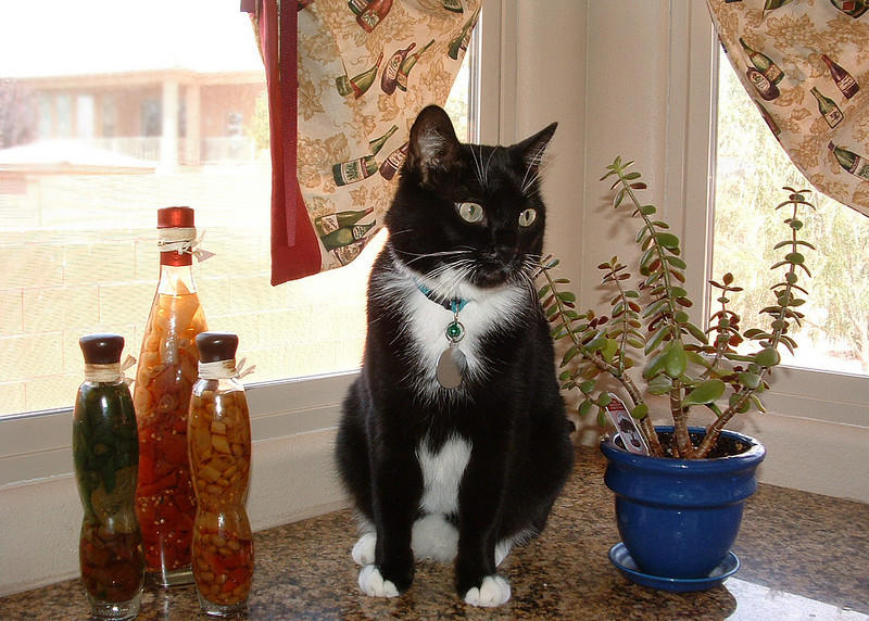 Tux (My Mother's Cat) - By Risa Mainord