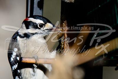 2014 TN birds