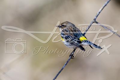 Back yard birds II
