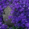 Blau im Garten