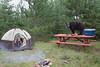 Black Bear (Ursus americanus) raiding campsite*