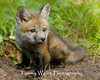 Red Fox Kit* (#8702)