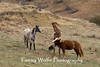 Feral (Wild) Horses Fighting, Theodore Roosevelt National Park (#7947)
