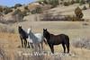 Horses at a North Dakota Ranch