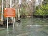 Florida Manatee  (Trichechus manatus latirostris) Sanctuary
