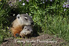 Woodchuck Mom and Baby* (#6345)