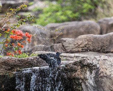 San Antonio Zoo, 03 20 19 (3 of 10)