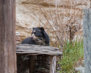 San Antonio Zoo, 03 20 19 (2 of 10)