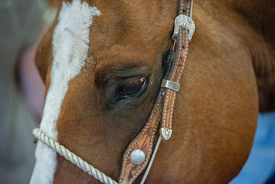 Horse with Soft Eye