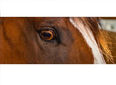 Horse - Amber Eye