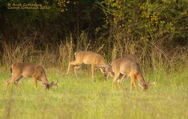 Before the Rut