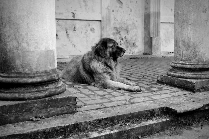 The Watchdog