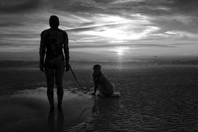 Iron Man And His Dog
