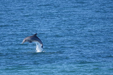 Dolphin arching