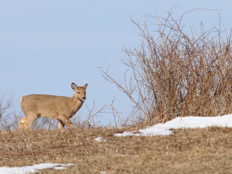 Sachuest Point National Wildlife Refuge 2-18-17