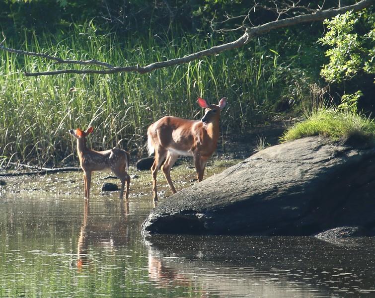 Hammonasset River 2016