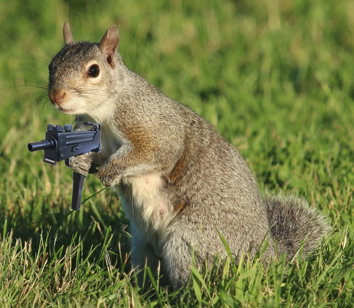 Squirrel with a MAC 10