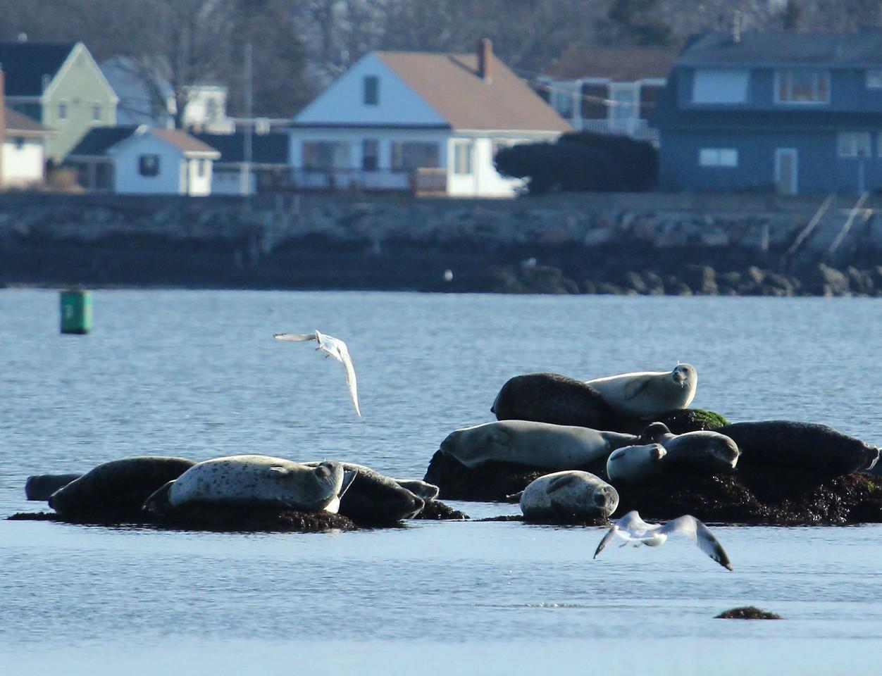 Off  Meigs Pt. / Clinton Harbor