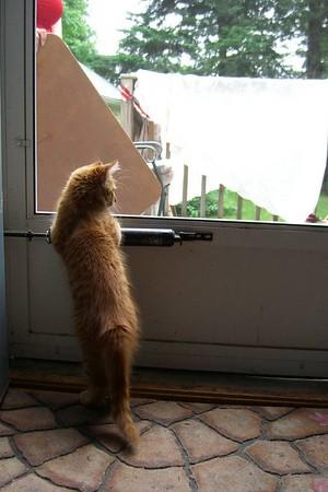 cimg0022 Max at the back door