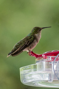 Hummer on our window feeder