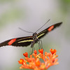 Sweet Nectar- 3