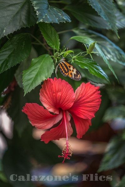 Nature's Lovelies