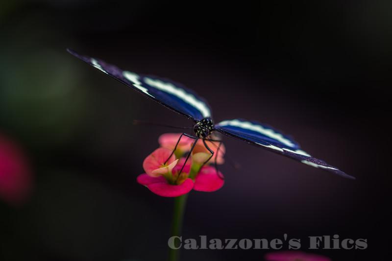 Sweet Nectar- 2