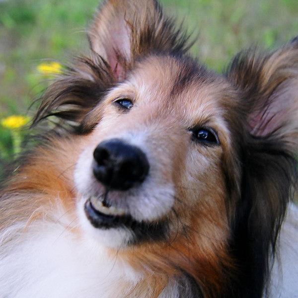 Ursa smiling. May 2006 in Tryon, NC.