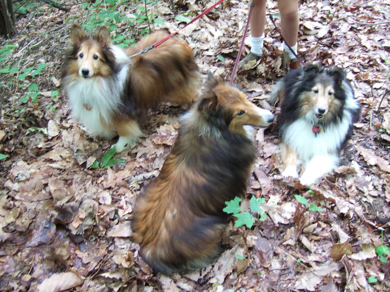Ursa (left), Cinnamon, and Cheynne. May 2006 in Tryon, NC.