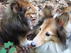 Ursa (front) and Cinnamon. May 2006 in Tryon, NC.