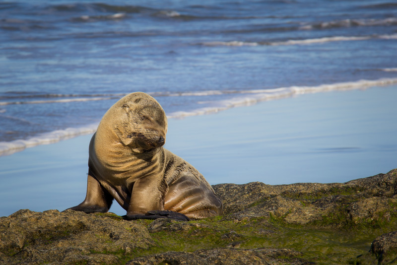 A very sad Sea Lion pup