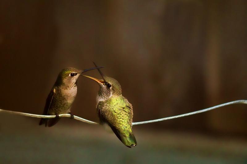 Mom feeding her baby.