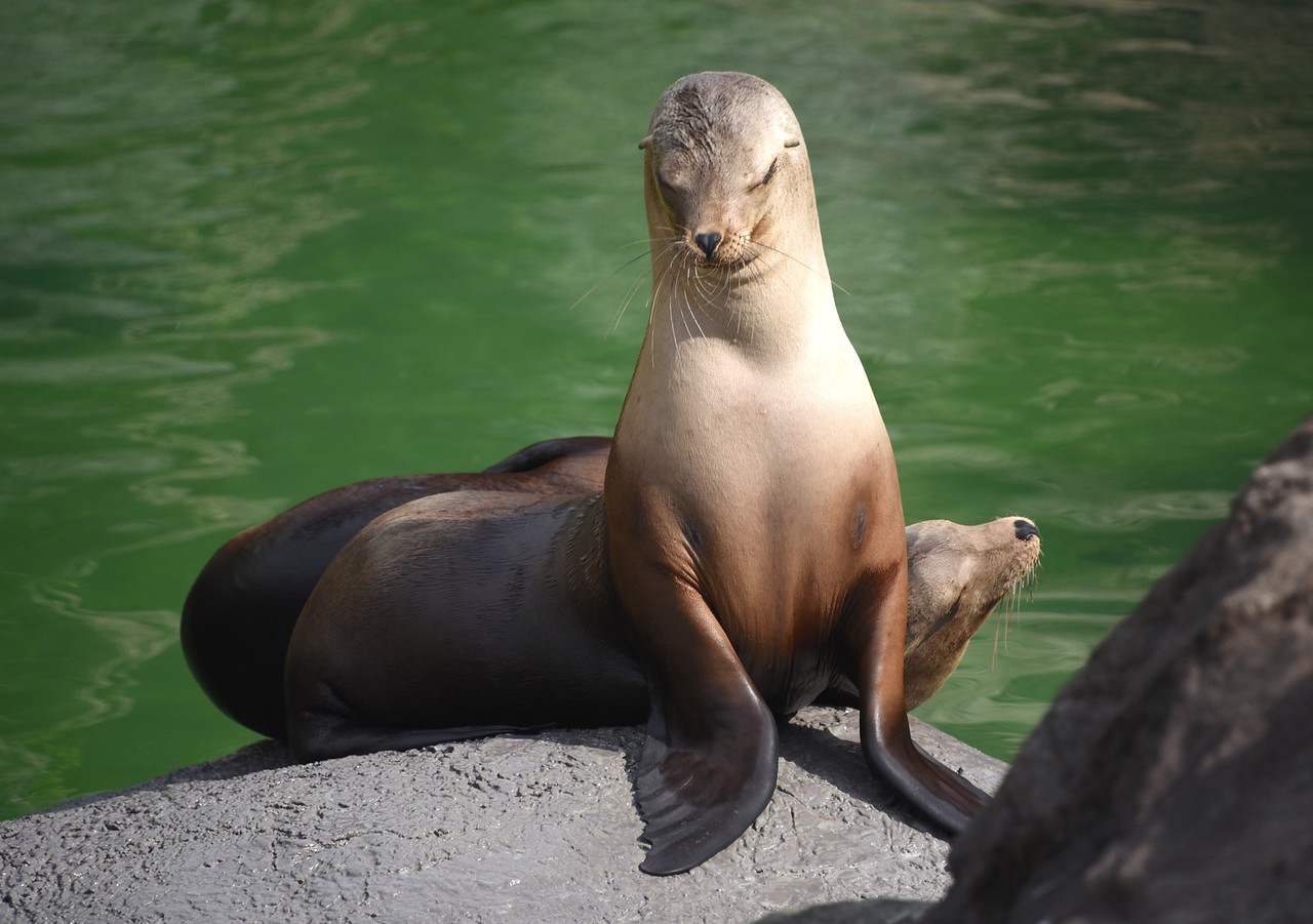 A Reprimanding Look from a Sea Lion