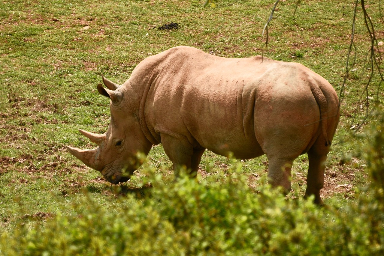 Rhinoceros Up Close